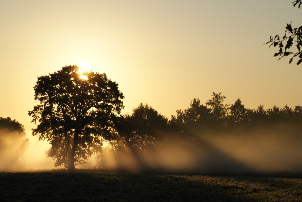 Boom met opkomende zon