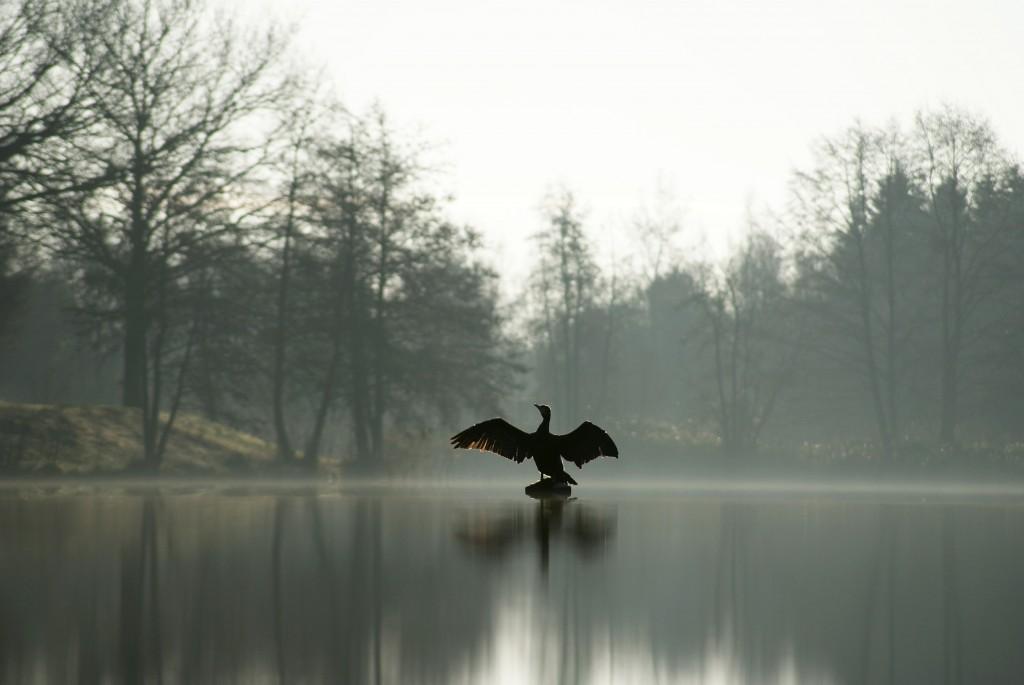 Vogel op het meer